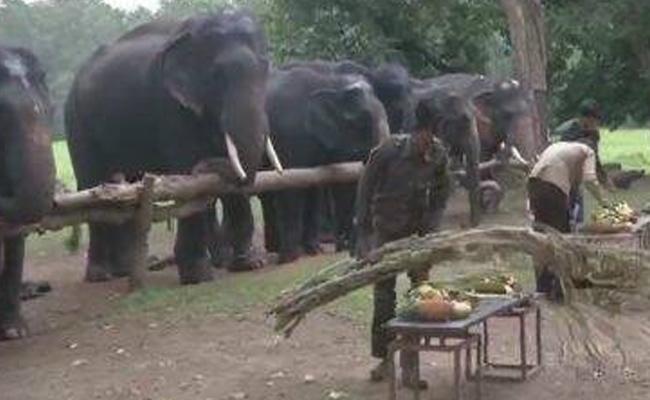 Elephants Goes Picnic In Tamil Nadu - Sakshi