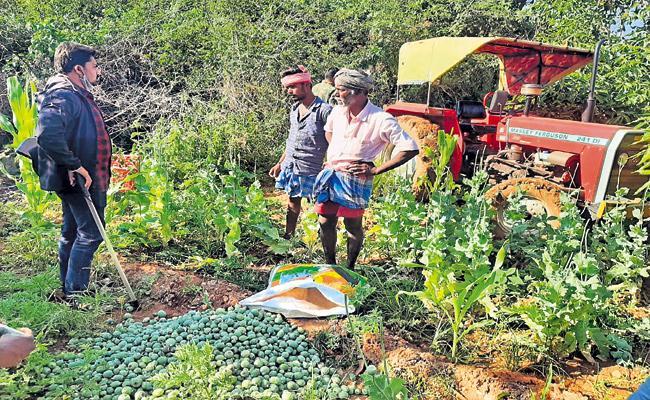 Prohibited poppy cultivation - Sakshi