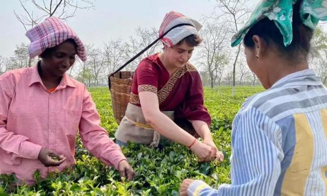 Priyanka Gandhi Tries Hand at plucking Tea Leaves in Assam - Sakshi