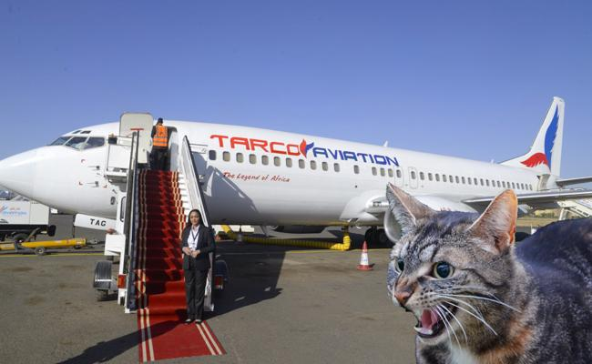 Cat Attacks Pilot On Flight, Forcing Plane To Divert Back - Sakshi