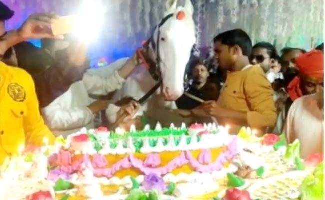 Man Celebrates Horse Birthday Lavishly In Bihar - Sakshi