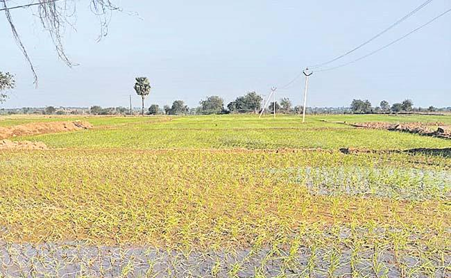 Suryapet: Gurrambodu Land Dispute Resolve As Early As Possible - Sakshi