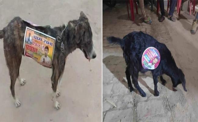 Uttarpradesh Panchayat Campaigning Going To dogs - Sakshi