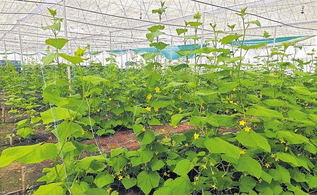 Horticultural crops are changing their appearance as ap govt is promoting them - Sakshi