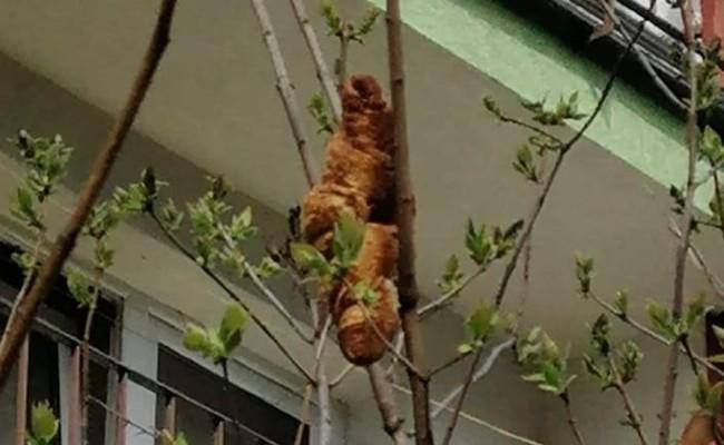Mysterious headless animal on a tree branch turns out to be a croissant - Sakshi