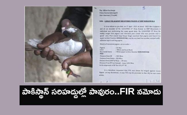 Fir Against Pigeon Caught White Paper India Pakistan Border - Sakshi