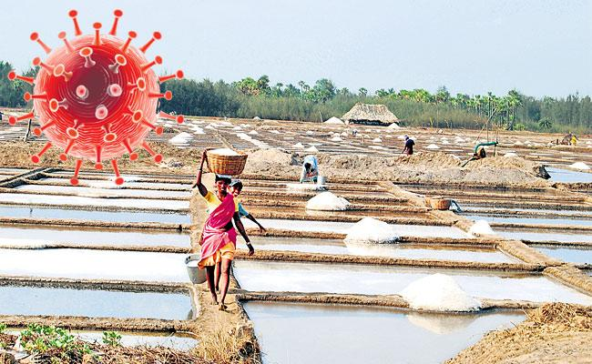 Corona threat to salt cultivation in Andhra Pradesh - Sakshi