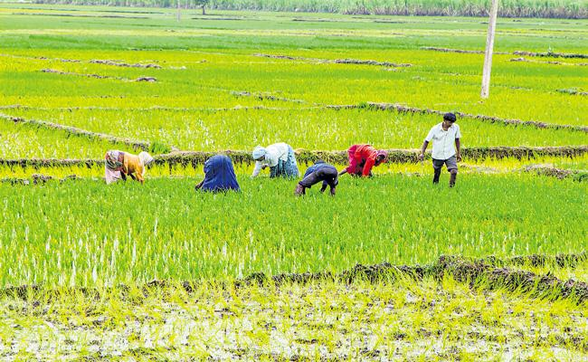 Decreasing percentage of workers in the agricultural sector - Sakshi