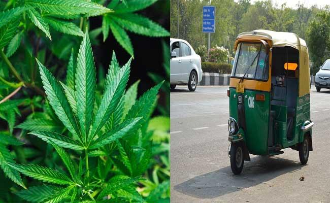 Faridabad: Woman Plants Marijuana In Husband Auto Over Affair - Sakshi