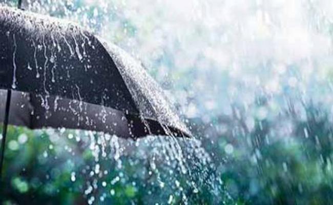 Premature rains during rabi crop cuts - Sakshi