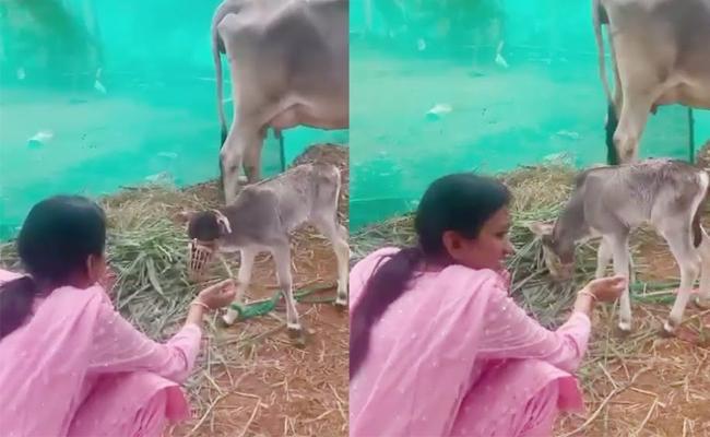 Viral: Anchor Suma Trolled For Cow Video In Social Media  - Sakshi