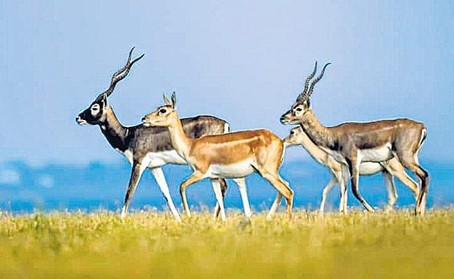 Sriramsagar Backwater Area Becoming As Wildlife Sanctuary Says - Sakshi