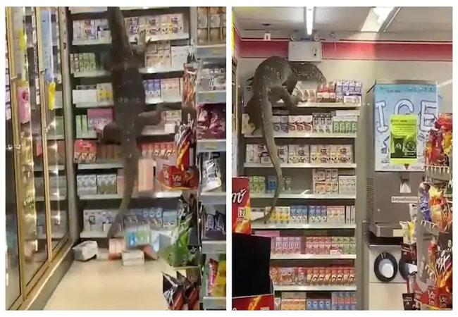 Monitor Lizard Goes Shopping At A Thailand Department Store In Viral Video - Sakshi
