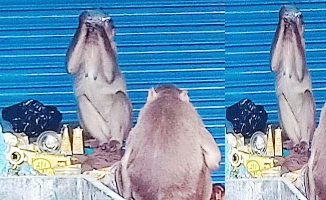 Monkeys Drink Alcohol Packets Left In Front Of Bar Karnataka - Sakshi
