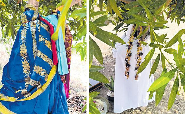 Local To Global Photo Feature In Telugu May 01 2021, Mango Trees Marriage - Sakshi