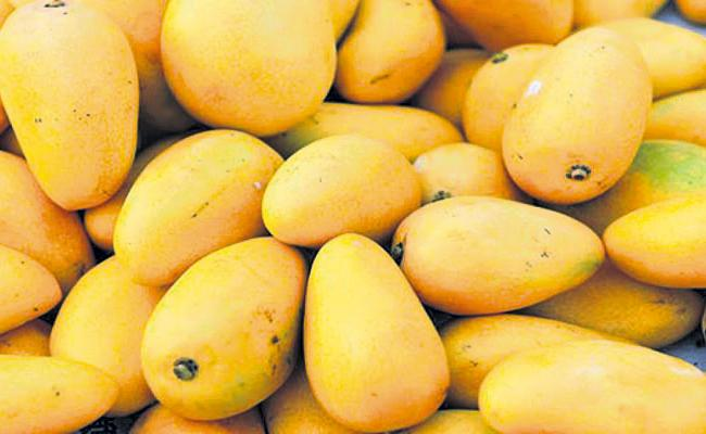 Huge Exports of mangoes even in corona times - Sakshi