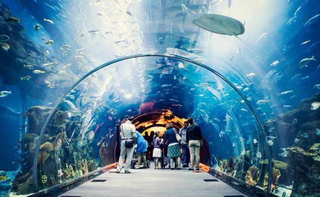 Plan To Set Up The First Oceanarium In The Country In Visakha - Sakshi