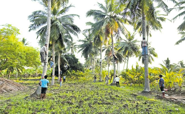 Coconut Development Board has developed a device that can easily climb a coconut tree - Sakshi