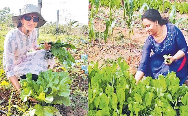 Urban Eco Farming In Vizianagaram District - Sakshi