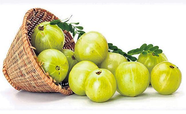 Amla vitamin which boosts the immune system - Sakshi