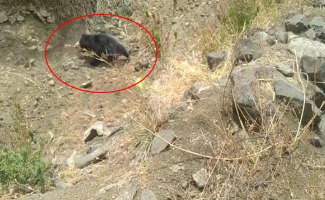 Bear Hulchul In Chityala Village - Sakshi
