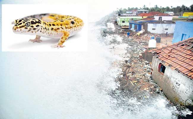 Dangerous Cyclone Tauktae Grows Stronger Along India Coastal areas - Sakshi
