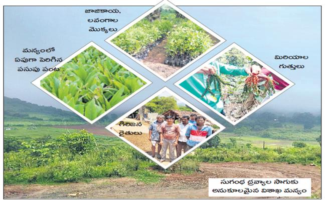 Department of Horticulture plans to increase the acreage of spices - Sakshi