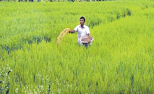 Govt hikes subsidy on DAP fertiliser by 140percent to rs 1,200 per bag - Sakshi