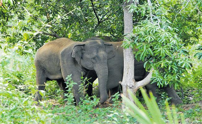 People want a permanent solution from elephants - Sakshi