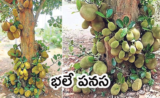 Local to Global Photo Feature: Jackfruit, Cable Car, Corona Isolation Centre, Lockdown - Sakshi