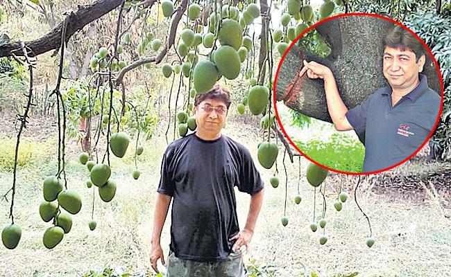 What is Girdling, Ring Barking of Fruit Trees: Full Details in Telugu - Sakshi