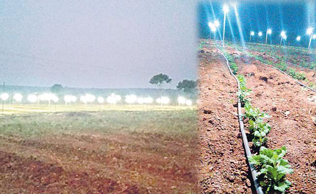Chrysanthemum Growing In Artificial Lights: Kurnool Farmer Success Story - Sakshi
