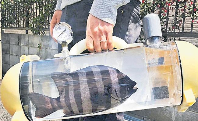 Bag That Used To Take Pet Fish To Walk In Japan - Sakshi