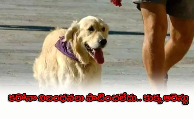 Dog Arrested With Owner Breaking Covid Protocol Indore - Sakshi