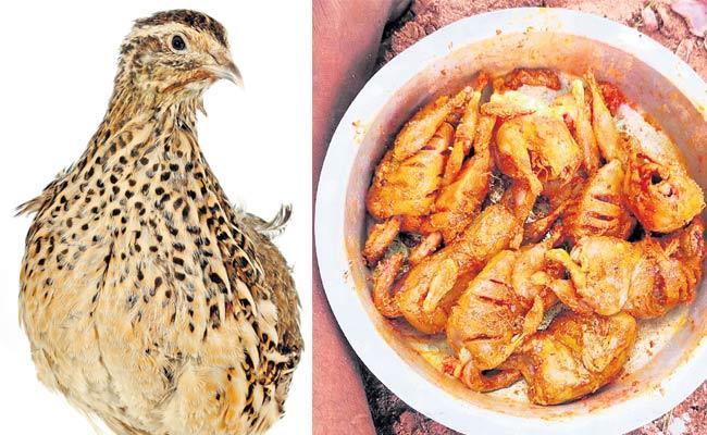Growing Demand For Kouju Pitta Meat In Market - Sakshi
