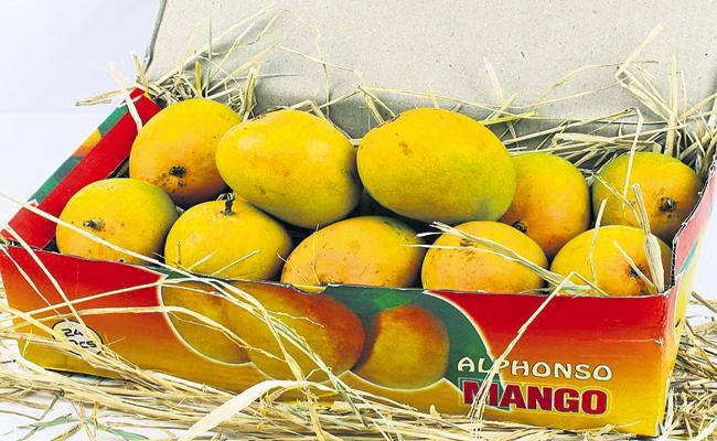 Andhra mango to South Korea - Sakshi