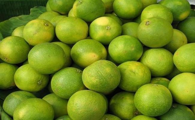 Nalgonda Mosambi: Cheer For Sweet Orange Farmers in Nalgonda District - Sakshi