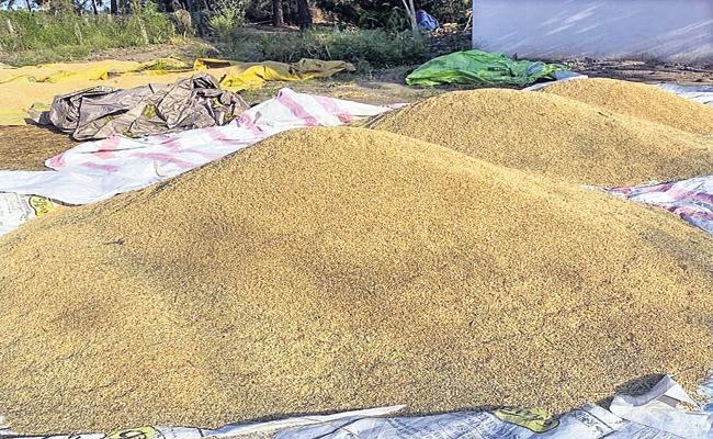 Both Godavari farmers have achieved good yields - Sakshi