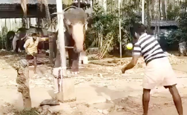 Michael Vaughan Share A Viral Video Of An Elephant Playing Cricket - Sakshi