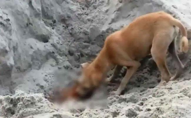 Locals Dogs Feed On Corona Dead Bodies At Uttarakhand Riverbank - Sakshi