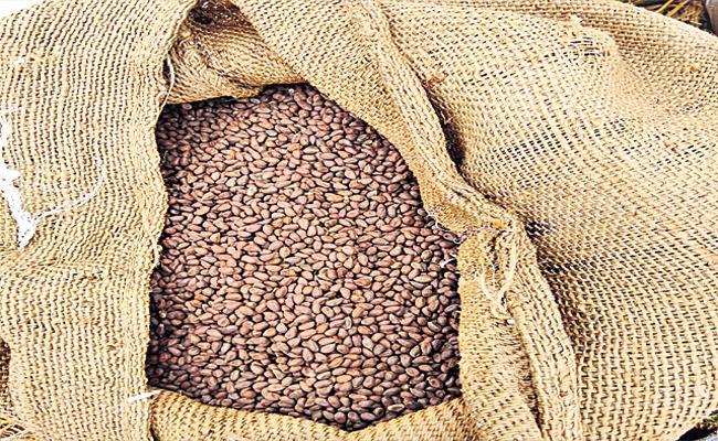 Suryapet Police Bust Fake Seeds Racket - Sakshi
