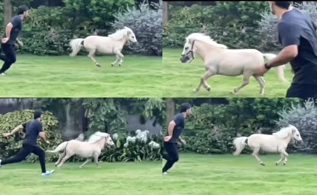 MS Dhoni Displays Fitness While Racing With Shetland Pony Became Viral - Sakshi