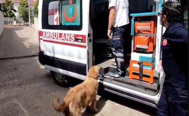 Watch: Dog follows ambulance carrying owner to hospital In Turkey - Sakshi