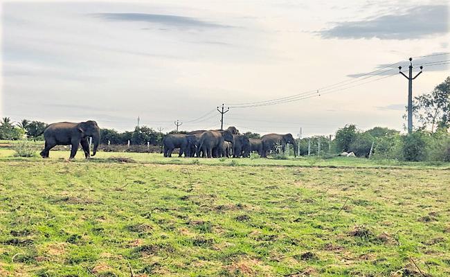 Elephants returned to the place where elephant deceased - Sakshi