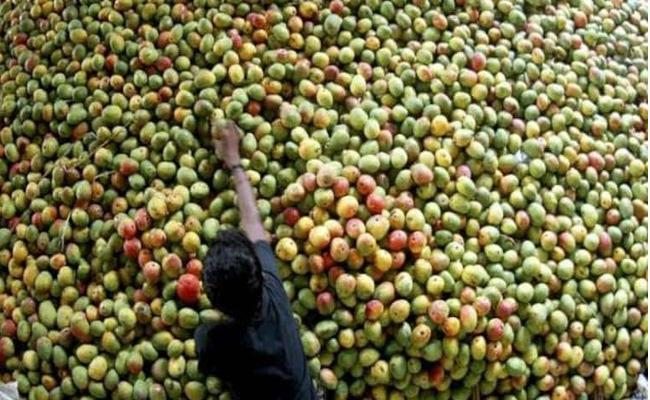 4000 Kilos Of Artificial Ripened Mangoes Seized In Tamil Nadu - Sakshi