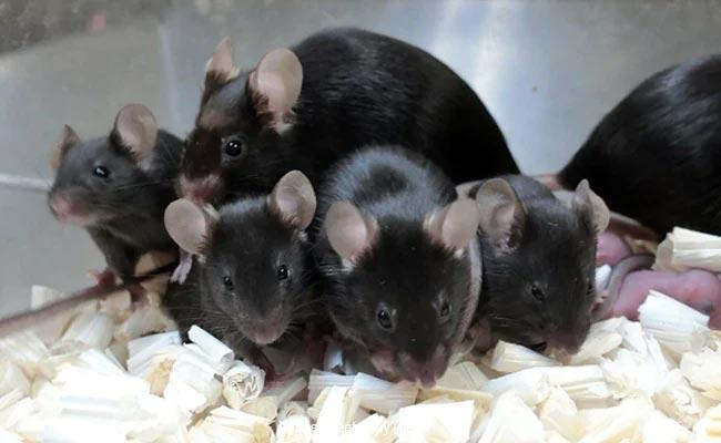 Mouse Sperm Stored On International Space Station Produce Healthy Space Pups - Sakshi