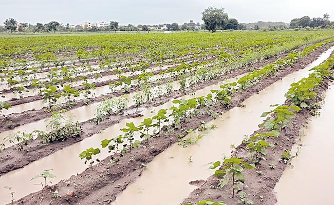 Raised Bed Farming: Agriculture Farmers Doing In Adilabad - Sakshi