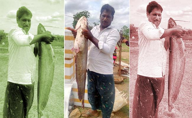 Massive 15kg Valuga fish Caught in Paleru Reservoir - Sakshi