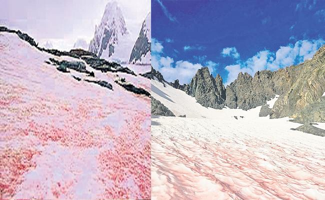 France: Mysterious Glacier Blood On Alps What Scientists Says - Sakshi