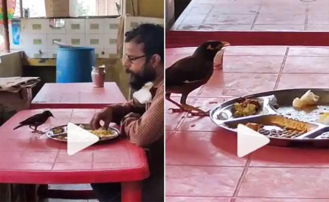 Viral Video: Man And Bird Eat Food From The Same Plate Heart Warming Video  - Sakshi